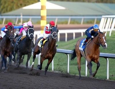 Horseware Unisex Jockeys Racing EXERCISE BREECHES Clarino Knee Black//Navy ALL SI